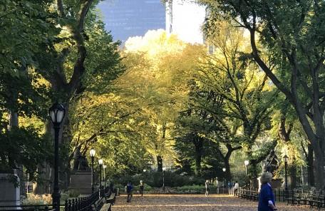 公園 木々 秋