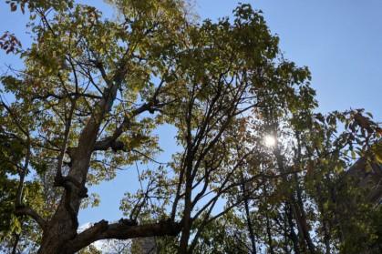 木から漏れる日光