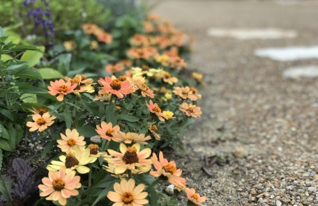 黄色い花 道端