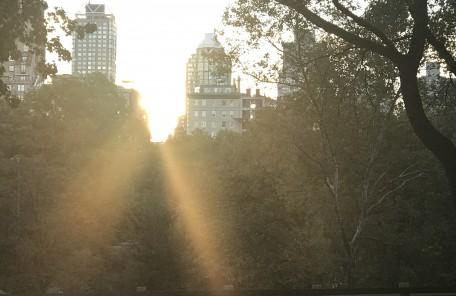 太陽の光 ビル 木々