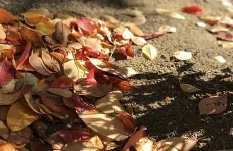 落ち葉 赤 黄 影