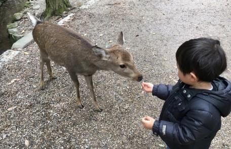 鹿 餌をあげる子供