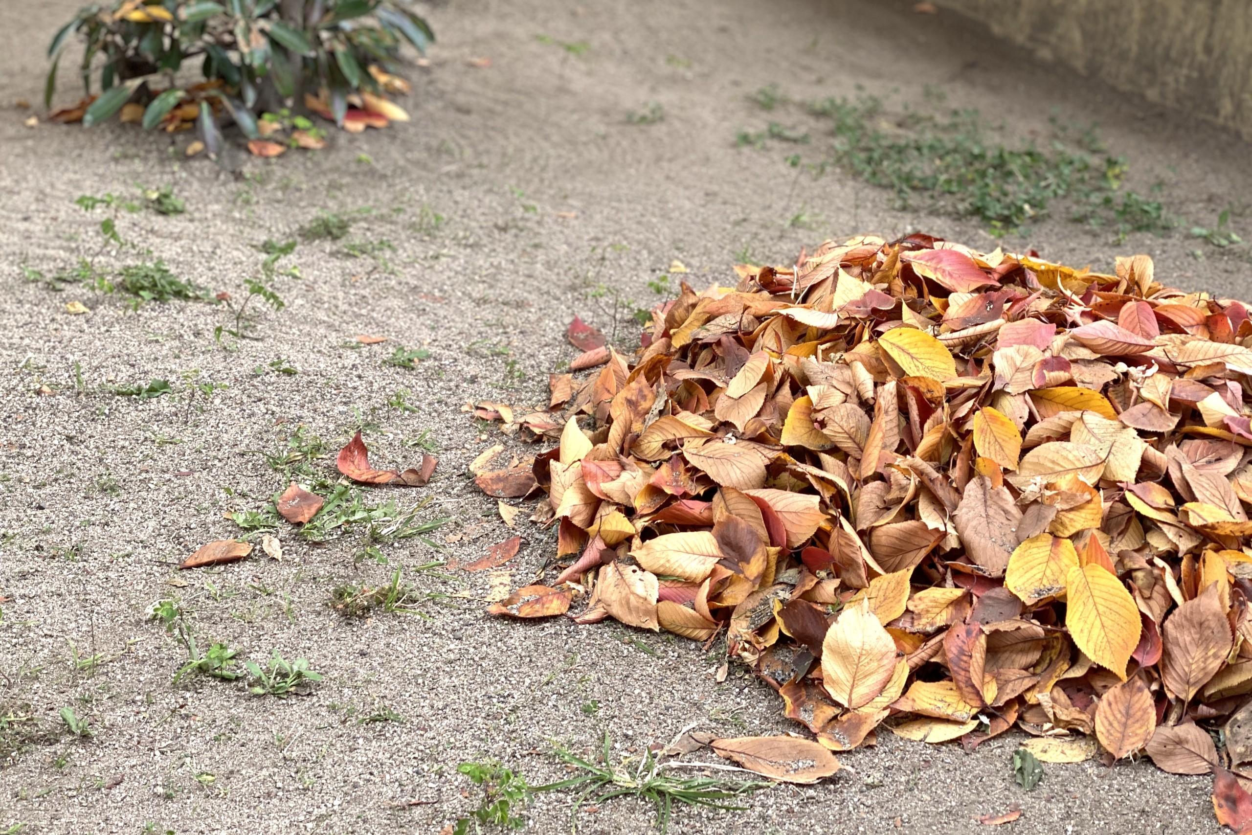 落ち葉で感じる季節