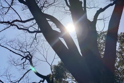 木の枝からもれる日光