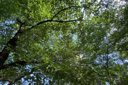 木を見上げる
