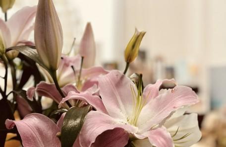 ピンク色の花 蕾